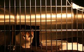 Opname en kattenpension - Dierenartsenpraktijk Dwingeloo Appelscha